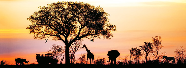 Travel Clinic Africa=
